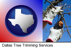 Dallas, Texas - a tree being trimmed with pruning shears