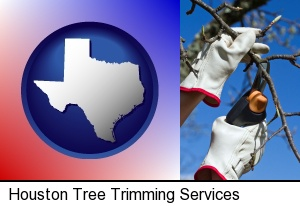 Houston, Texas - a tree being trimmed with pruning shears