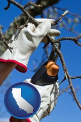 california map icon and a tree being trimmed with pruning shears