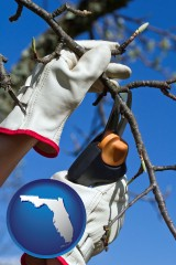 florida map icon and a tree being trimmed with pruning shears