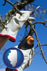 illinois map icon and a tree being trimmed with pruning shears