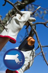 massachusetts map icon and a tree being trimmed with pruning shears