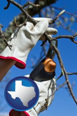 texas map icon and a tree being trimmed with pruning shears