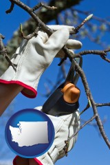 washington map icon and a tree being trimmed with pruning shears